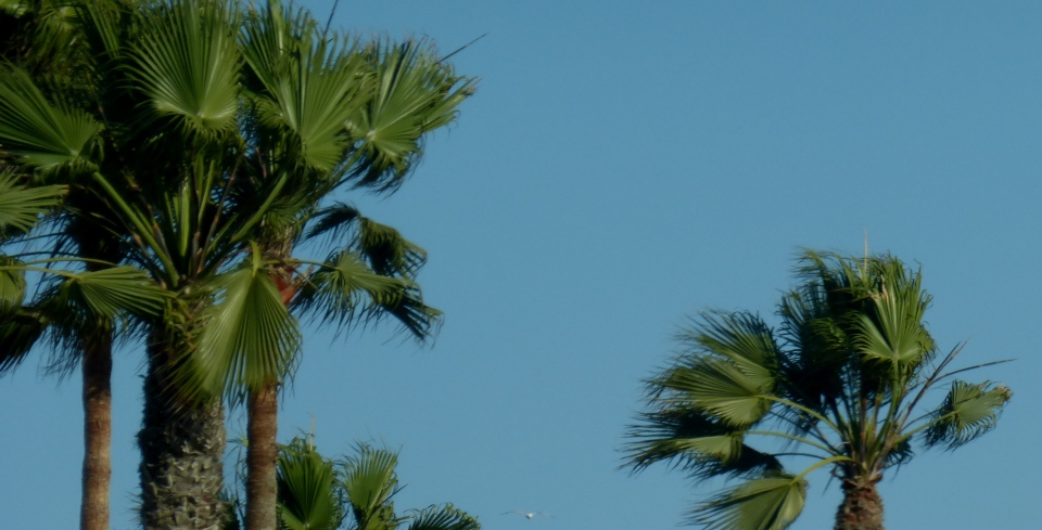 CALIFORNIA SPRING 2014 254