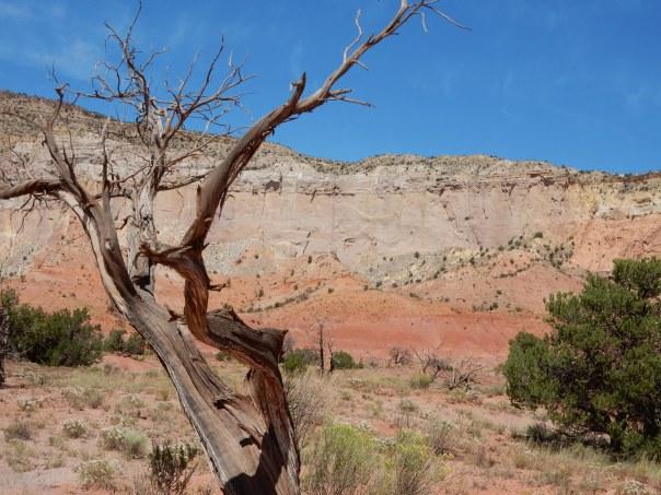 An O'Keeffe tree.